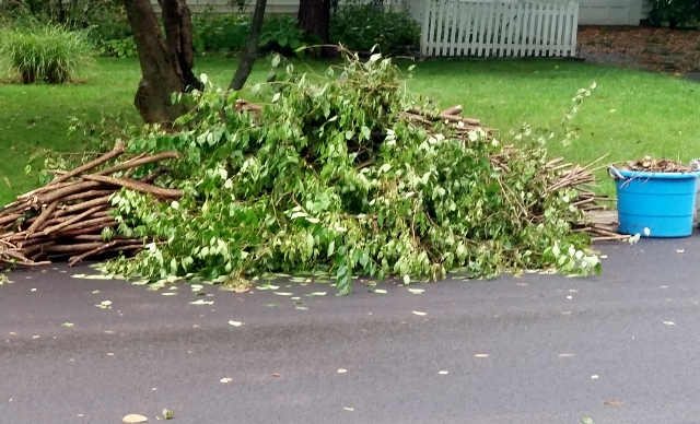 Green Waste Pick Up