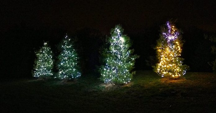 Advent Trees 2015