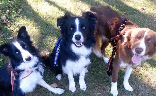 Dog Care Business Lake Genvea, ThrillSeeker Dog Sports & Services