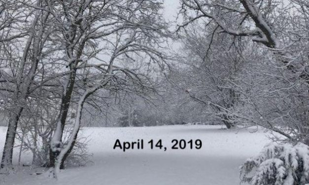 Surprising Stuff, April 17, 2019