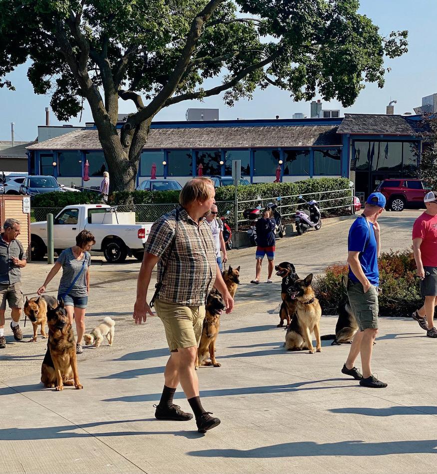 Animal Training Lake Geneva